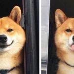 """17 ภาพชวนยิ้มของเหล่าเจ้าตูบ ที่พิสูจน์ว่า """"ความสุข"""" หาได้ง่ายๆ จากสุนัขนี่แหละ"""