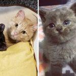แมวหนุ่มดูแลแมวสาวหลังผ่านเรื่องร้ายมาด้วยกัน แถมช่วยดูแลลูก นี่พ่อแมวในอุดมคติชัดๆ!!