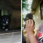 'หนุ่มช่างก่อสร้าง' อาสามาช่วยลูกแมวที่ติดอยู่ใต้หลังคา แถมยังขอรับเลี้ยงมันด้วย