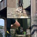 แมวแอบหนีเที่ยว 2 สัปดาห์ผ่านไปก็ยังไม่กลับบ้าน เจออีกทีอยู่บนสะพานสูง รอคนมาช่วย