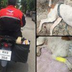 บุรุษไปรษณีย์ไทย ช่วยส่งจดหมายไม่พอ ยังช่วยส่งน้องหมาถูกรถชนไปรักษาอีก