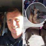 ทหารเรือหนุ่มได้อยู่กับสุนัขคู่หูอีกหลังจากห่างกัน 7 เดือน และครั้งนี้มันเป็นสัตว์เลี้ยงของเขาแล้ว