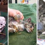 ลูกแมวถูกพบในถังขยะ ด้วยสภาพโฟมแข็งปกคลุมทั่วหน้า โชคดีที่คนเก็บขยะช่วยไว้ทัน
