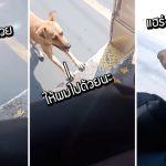 สุนัขจรจัดวิ่งไล่ตามรถบัส แม้เหนื่อยก็ไม่ยอมแพ้ จนคนขับใจอ่อนและรับเลี้ยงมันในที่สุด