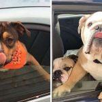 พนักงานไดรฟ์ทรูสาวรักหมาเกิ๊น จำชื่อหมาที่ผ่านมาได้ มากกว่าชื่อลูกค้าที่เป็นคนซะอีก