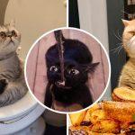 รวม 20 ภาพชีวิตทาสเมื่ออยู่กับแมว มีเจ้านายป่วนๆ แบบนี้ไม่มีเบื่อแน่นอน