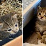 ลูกแมวถูกพบลำพังขณะซ่อนตัวในโรงนา ได้รับการช่วยเหลือ จนมีชีวิตใหม่ที่ดีกว่าเดิม