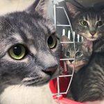แมวจรกลับมาหาครอบครัวที่ช่วยมันไว้เป็นประจำ ล่าสุด มันหอบลูกมาด้วย 2 ตัว