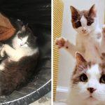 แม่แมวจรห่วงลูกมาก ไม่เคยปล่อยให้อยู่นอกสายตา แม้ถูกช่วยแล้ว ก็ยังทำเหมือนเดิม