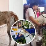 หมาจรนั่งรอเพื่อนรักหน้าประตูอย่างไร้วี่แวว 2 อาทิตย์ ครางเสียใจเมื่อรู้ว่าเขาตายแล้ว
