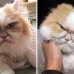 """แมวเหมียวหน้าโกรธ ทำอะไรก็บึ้งตึงไปหมด ชาวเน็ตโหวตนี่แหละ """"Grumpy Cat ตัวใหม่"""""""