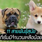 นี่คือ 11 สายพันธุ์สุนัขที่น่าเป็นห่วง เพราะพวกมันมีจำนวนเหลือน้อยเต็มทีแล้ว