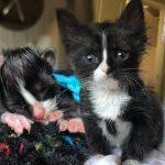 """""""ลูกแมวกำพร้า"""" เหลือกันอยู่ 2 ตัว พวกมันจึงสู้สุดกำลังเพื่อมีชีวิตรอดไปด้วยกัน"""