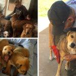 คุณตาผู้รักหมา หวังเพียงแค่ให้หมาทั้ง 27 ตัวที่เลี้ยงอยู่ มีบ้านใหม่ก่อนเขาจากไป