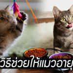 ทาสแมวควรรู้ 5 เคล็ดไม่ลับ ที่ทำแล้วช่วยให้เจ้านายของเราอายุยืนยิ่งขึ้น