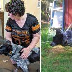 หมาจรมาอยู่ในบ้านเด็กหญิงนานนับเดือน ก่อนจะกลายเป็นฮีโร่ที่ช่วยชีวิตเธอไว้