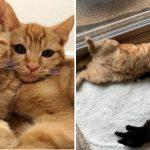 สองพี่น้องแมวส้มช่วยลูกแมวตัวใหม่แหกคอก เพื่อจะได้นอนกอดพวกมันอย่างถนัด