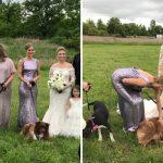 เพื่อนเจ้าสาวจูงสุนัขจากศูนย์แทนการถือช่อดอกไม้ เพื่อเพิ่มโอกาสในการรับเลี้ยง