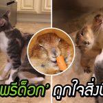 'แพรีด็อก' สุดน่ารัก กับงานกิจกรรมยามว่างที่น่ารักยิ่งกว่า ชอบยืนให้แมวเลียขนฟินๆ