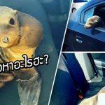 ตำรวจต้องไปจับตัวการที่ทำให้รถติด แต่พอไปถึงก็พบว่าเป็น 'สิงโตทะเล' สุดน่ารัก
