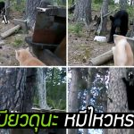 เหมียวดุนะ หมีไหวเหรอ!! แมวสายสตรอง เจอหมีป่าไม่กลัว ไล่จนหมีต้องหนีขึ้นต้นไม้!?