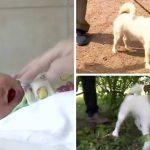 หมาลากเจ้าของให้ไปเดินเล่นทางเปลี่ยว เพื่อไปช่วยชีวิตเด็กทารกที่ถูกทิ้ง