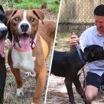 หมาบ็อกเซอร์เกิดมาตาบอด พ่อหมาจึงอยู่ช่วยดูแลมัน และทำหน้าที่เป็นดวงตาให้