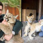 หนุ่มพาลูกสิงโตมาเลี้ยงหลังบ้านเพื่อช่วยชีวิตพวกมัน แม้ว่าเพื่อนบ้านจะไม่ชอบใจ