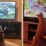 เจ้าของร่วมแชร์ หมาแมวติดรายการช่อง National Geographic หนึบ ไม่รู้มีอะไรดี!?