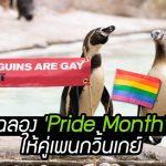 สวนสัตว์ทำป้ายพิเศษให้ 'คู่เพนกวิ้นเกย์' เพื่อให้มันได้ร่วมฉลอง 'Pride Month' ด้วย