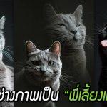 สาวฝากแมวไว้กับเพื่อนที่เป็นช่างภาพ กลับมาอีกที แมวกลายเป็นนางแบบไปซะแล้ว