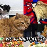อดีตแมวจร ผันตัวพยาบาลประจำคลีนิกและคอยช่วยดูแลสัตว์ทุกตัวที่ต้องการความรัก