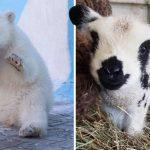 22 สัตว์โลกตัวจิ๋ว กับความน่ารักแบบมินิ อาจจะกอดไม่ถนัด แต่รักหมดใจแน่นอน