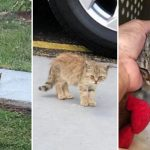 หญิงสาวช่วย 'ลูกแมวที่อยู่ลำพังบนทางเท้า' ให้โอกาสครั้งใหม่ มันไม่โดดเดี่ยวอีกต่อไป