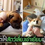 โรงพยาบาลให้สัตว์เลี้ยงเข้ามาเยี่ยมเจ้าของได้ ตามคำขอสุดท้ายของชายผู้ล่วงลับ