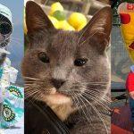แมวเกิดมาไม่มีเปลือกตา พลิกชีวิตกลายเป็น 'แมวแว่นกันแดด' ผู้โด่งดังในอินสตาแกรม