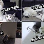 น้องหมาติดพี่แมวเกิ๊น เห็นพี่แมวไปไหนก็จะไป เห็นเขาทำอะไรก็จะทำด้วยหมด!!
