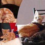 พี่แมวดำแสนเป็นมิตร ได้มาเจอกับน้องแมวส้มขี้เหงา ทั้ง 2 เลยกลายมาเป็นพี่น้องกัน