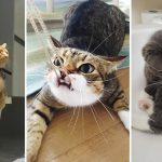 รวม 14 ความน่ารักซนป่วนฉบับแมวๆ ทาสเห็นเป็นต้องยอม เพราะมันน่ารักไม่ไหวแล้ว