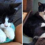 ลูกแมวน้อยสีขาวดำ เกาะหนึบติดพี่แมวสีเดียวกัน สาวจึงต้องรับเลี้ยงอย่างช่วยไม่ได้