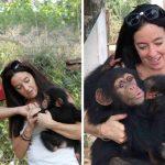 ชิมแปนซีน้อยกอดผู้ช่วยเหลือไม่ปล่อย ตอบแทนที่ช่วยให้มันรอดจากการค้าสัตว์