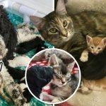 'มิ้วกำพร้า' มีแม่บุญธรรมเป็นแมว ต่อด้วยหมา ก่อนถูกรับเลี้ยงโดยเจ้าของสุนัข
