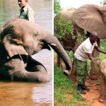 'ช้างกำพร้า' ที่เคยถูกช่วยเหลือ พาลูกตัวใหม่มาอวดผู้ดูแล เพื่อแสดงความขอบคุณ