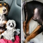 'สาวทาสแมว' ชีวิตเปลี่ยนไปตลอดกาลหลังตกหลุมรัก 'ลูกหมาถูกทิ้ง' ที่เธอช่วยเอาไว้