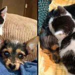 'ลูกแมว' กับ 'ลูกหมา' ถูกพบอยู่ด้วยกันบนถนน และทั้งคู่ยืนยันจะไม่แยกจากกันเด็ดขาด