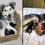 พลเมืองดีช่วย 'แม่หมาผู้อ่อนโยน' ที่ถูกทิ้งในกล่องปิดผนึกพร้อมลูกน้อยทั้ง 9 ตัว