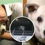 หนุ่มเจ้าของสุดเศร้า เมื่อมองมาไม่เจอหมา ซึ่งรอเขากลับเข้าบ้านทุกวันตลอด 11 ปี