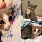 'ลูกแมวขี้อาย' ชีวิตเปลี่ยน หลังได้พบครอบครัวใจดีและเพื่อนมิ้วจอมเฟรนด์ลี่