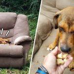 เจ้าหมาไม่รู้ตัวว่าถูกทิ้ง ยังคงนั่งรอบนโซฟาที่ถูกทิ้งพร้อมกัน หวังเจ้าของจะกลับมารับ