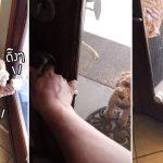 หญิงทำกริ่งให้เจ้าหมา เวลามันอยากเข้าออกบ้านจะได้รู้ ผลคือใช้ดีเกินจนน่าหวั่นใจ